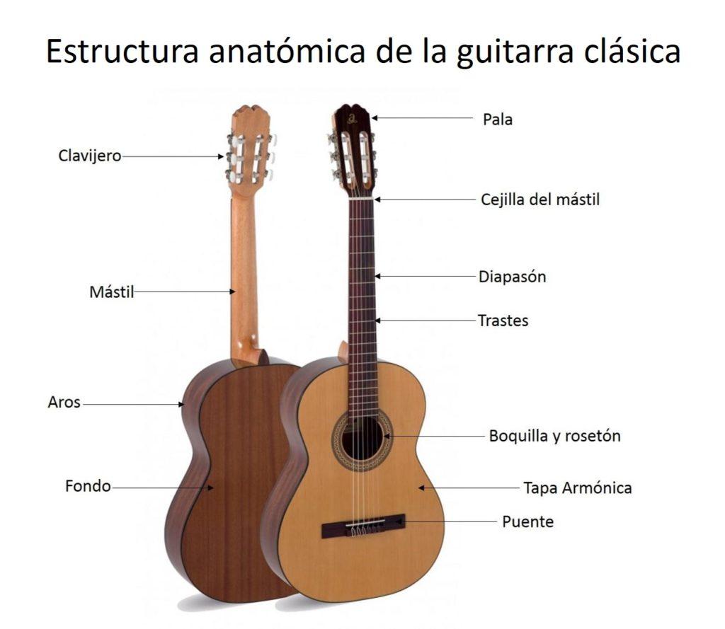 Fotografía Estructura anatómica de la guitarra clásica